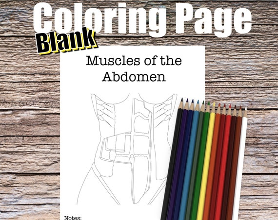 Muscles of the Abdomen Anatomy Coloring page (BLANK)