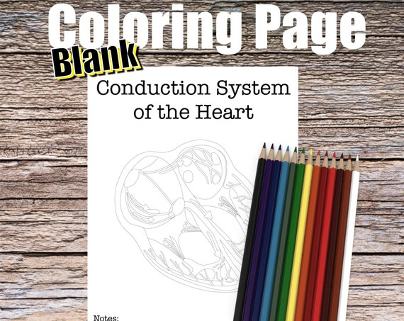Conduction System of the Heart Anatomy Coloring page (BLANK)
