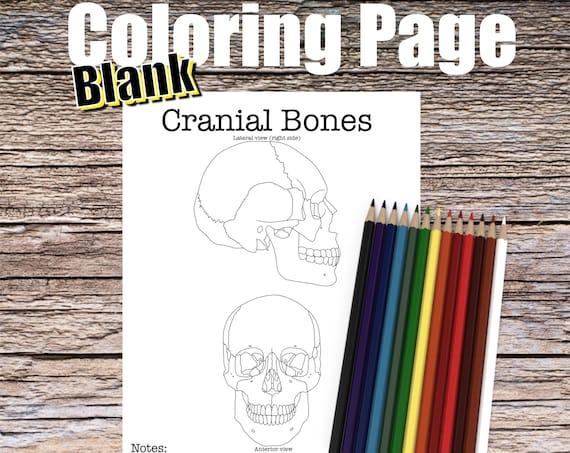 Cranial Bones Anatomy Coloring page (BLANK)