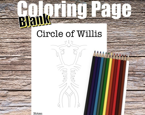 Circle of Willis Anatomy Coloring page (BLANK)