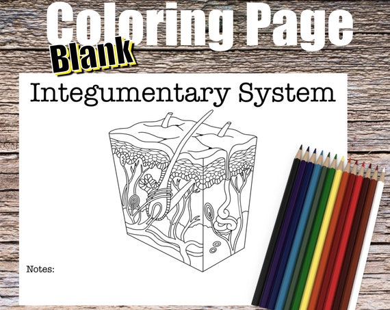 Integumentary System Coloring page (BLANK)