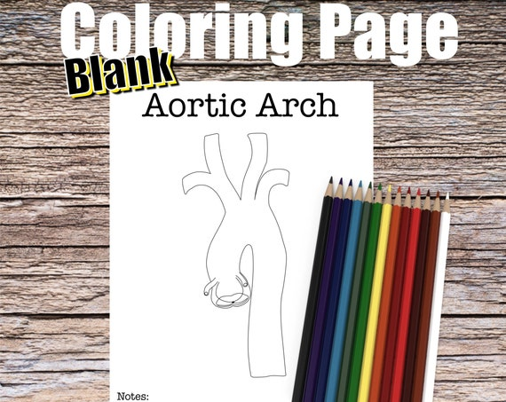 Aortic Arch Anatomy Coloring page (BLANK)