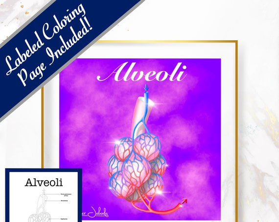Alveoli, Printable, 30 x 30 Wall Art, Coloring Page Included
