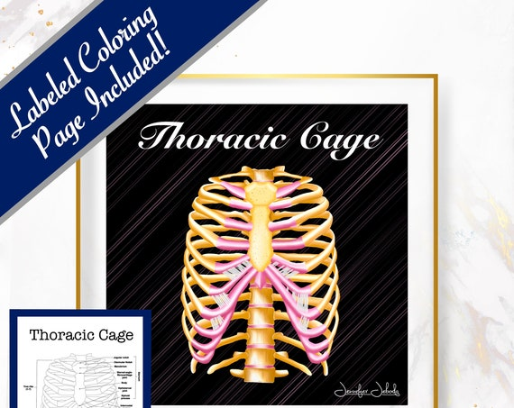 Thoracic Cage, Printable, 30 x 30 Wall Art, Coloring Page Included