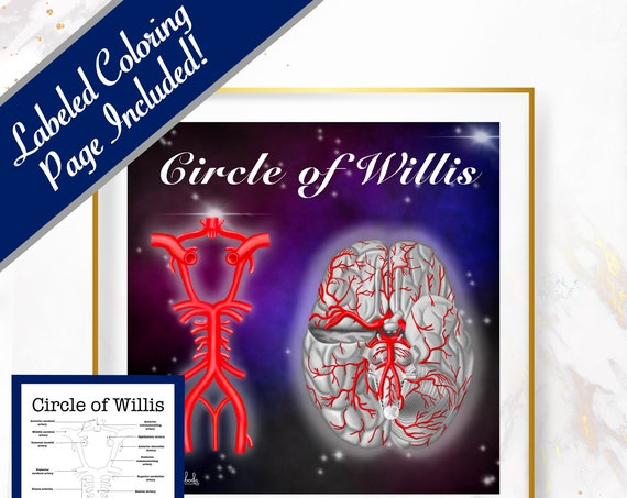 Circle of Willis, Printable, 30 x 30 Wall Art, Coloring Page Included