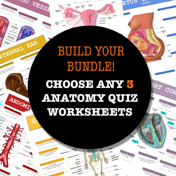 Build-Your-Own Anatomy Quiz Worksheet Bundle - 3 Pages