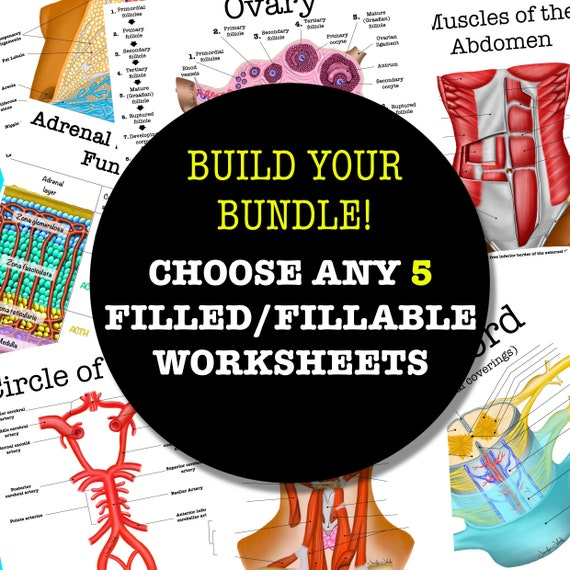 Build-Your-Own Filled/Fillable Anatomy Worksheet Bundle - 5 Pages