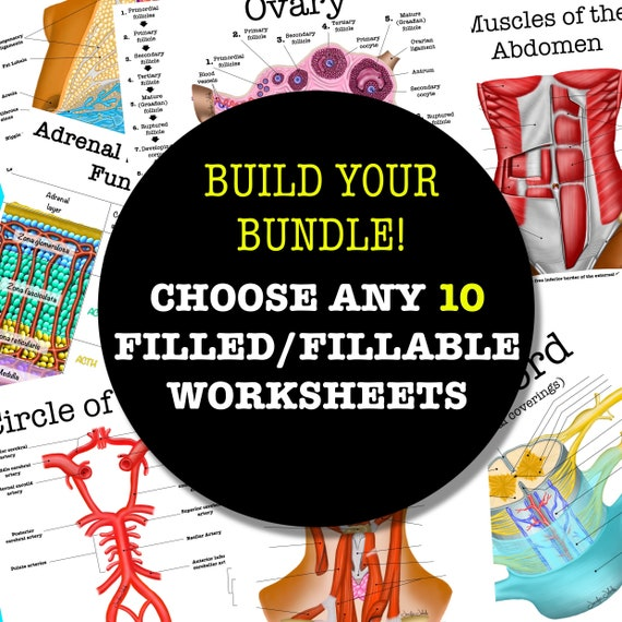 Build-Your-Own Filled/Fillable Anatomy Worksheet Bundle - 10 Pages