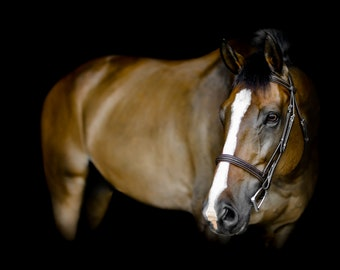 Horse print, Digital, Canvas, Acrylic Print, Horse eye, brown horse, bay, Equine photography, Equine portrait, Horse wall art, Animal prints