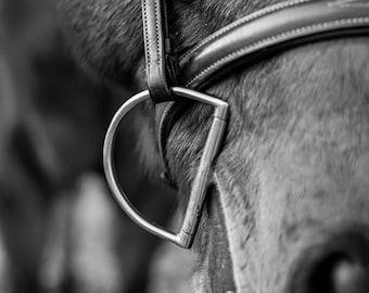 Horse print, Digital, Canvas, Acrylic Print, Horse bit, brown horse, Equine photography, Equine portrait, Horse wall art, Animal prints