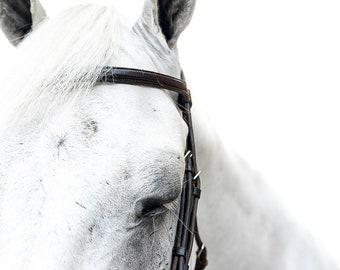 Horse print, Digital, Canvas, Acrylic Print, Horse eye, White horse, Equine photography, Equine portrait, Horse wall art, Animal prints