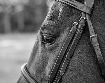 Horse print, Digital, Canvas, Acrylic Print, Horse eye, brown horse, Equine photography, Equine portrait, Horse wall art, Animal prints