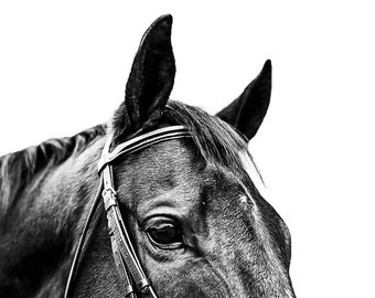 Horse print, Digital, Canvas, Acrylic Print, Horse face, brown horse, Equine photography, Equine portrait, Horse wall art, Animal prints