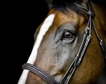 Horse print, Digital, Canvas, Acrylic Print, Horse eye, brown horse, eye, Equine photography, Equine portrait, Horse wall art, Animal prints