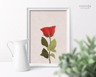 Red Flower Poster, Vintage Printable Art, Downloadable Prints, Botanical Print, Digital Illustration, Vintage Rose Floral Wall Art