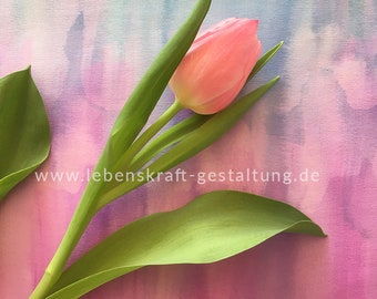 Tulip   Flowering   artistically   Photo   Download   Poster   Self-printing   Gift   Decoration