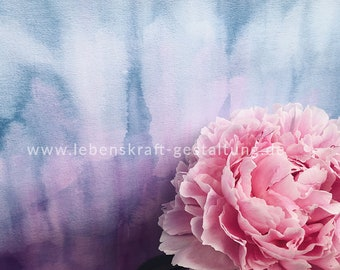 Peony   Peony   artistically   Photo   Download   Poster   Self-printing   Gift   Decoration