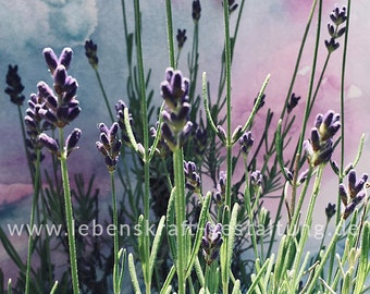Lavender   artistically   Photo   Download   Poster   Self-printing   Gift   Decoration