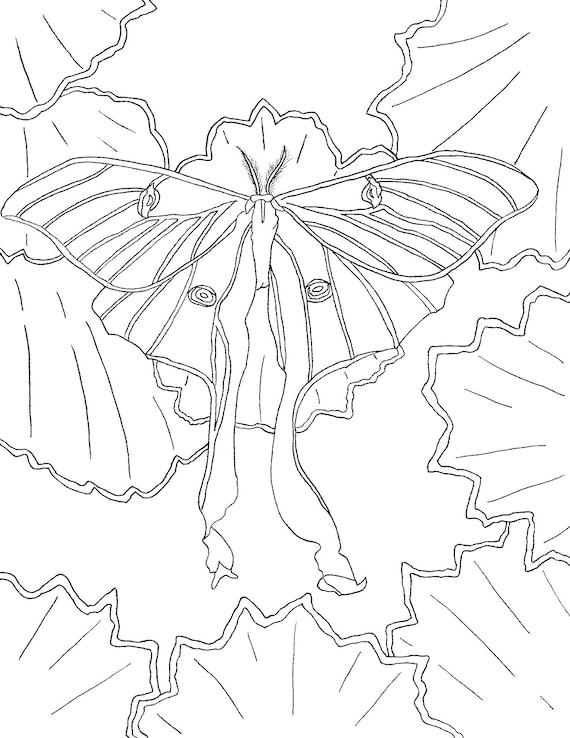 Luna Moth Coloring Pages Etsy