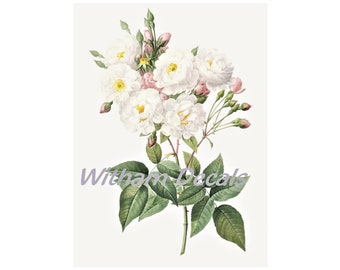 Flower Water slide decal White Wild Rose vinyl Sticker A5 A4,A3