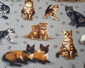 """Flannel Fabric - Photo Real Kitties - 28"""" REMNANT - 100% Cotton Flannel"""