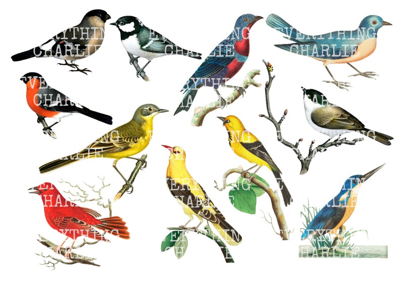 Bird Fussy Cut digital download printable card making scrapbooking and stickers Junk journal