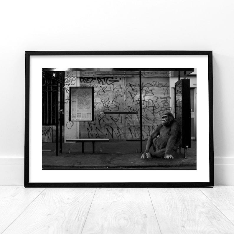 Gorilla Photography Print Monkey Wall Art Wild Animal image 0