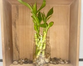 Set of Five Stalks 4in Lucky Bamboo Plant