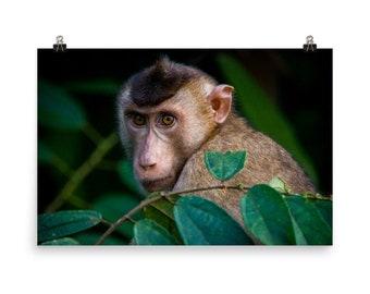 monkey animal wildlife coin 2000 Gibraltar 5 pence Barbary ape