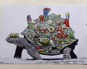 Print of a drawing - Giant tortoise with fantastic coral