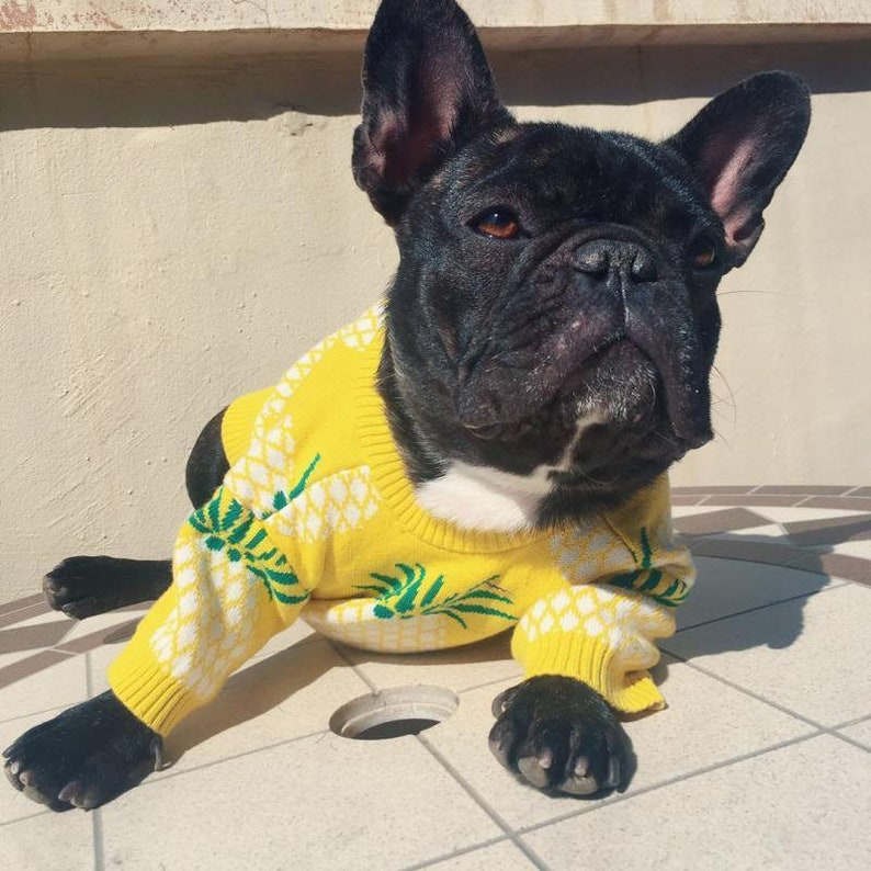 Pineapple Dog Sweater | Stay at Home Mum
