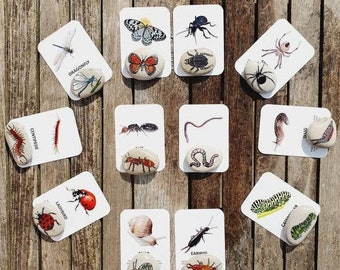Minibeasts Flashcards - Nature Cards - Bugs, Insects - Fact Cards - Learning Cards