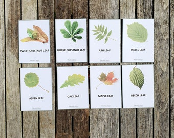 Printable Leaves Flashcards - Leaves Identification Set - Nature Card Printables