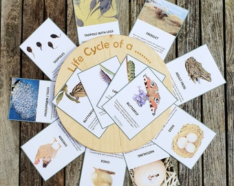 Lifecycle card printables, Frog lifecycle - butterfly lifecycle - chicken lifecycle, Homeschooling, Early Years, Spring study