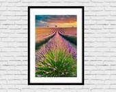 Fine Art Landscape Photo Print, Lavender