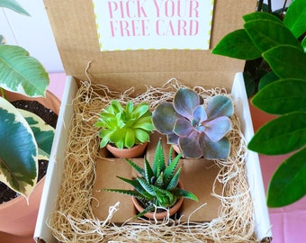 Sweet Little Plant Box, Succulent gift box with unique plants, great gift for birthday