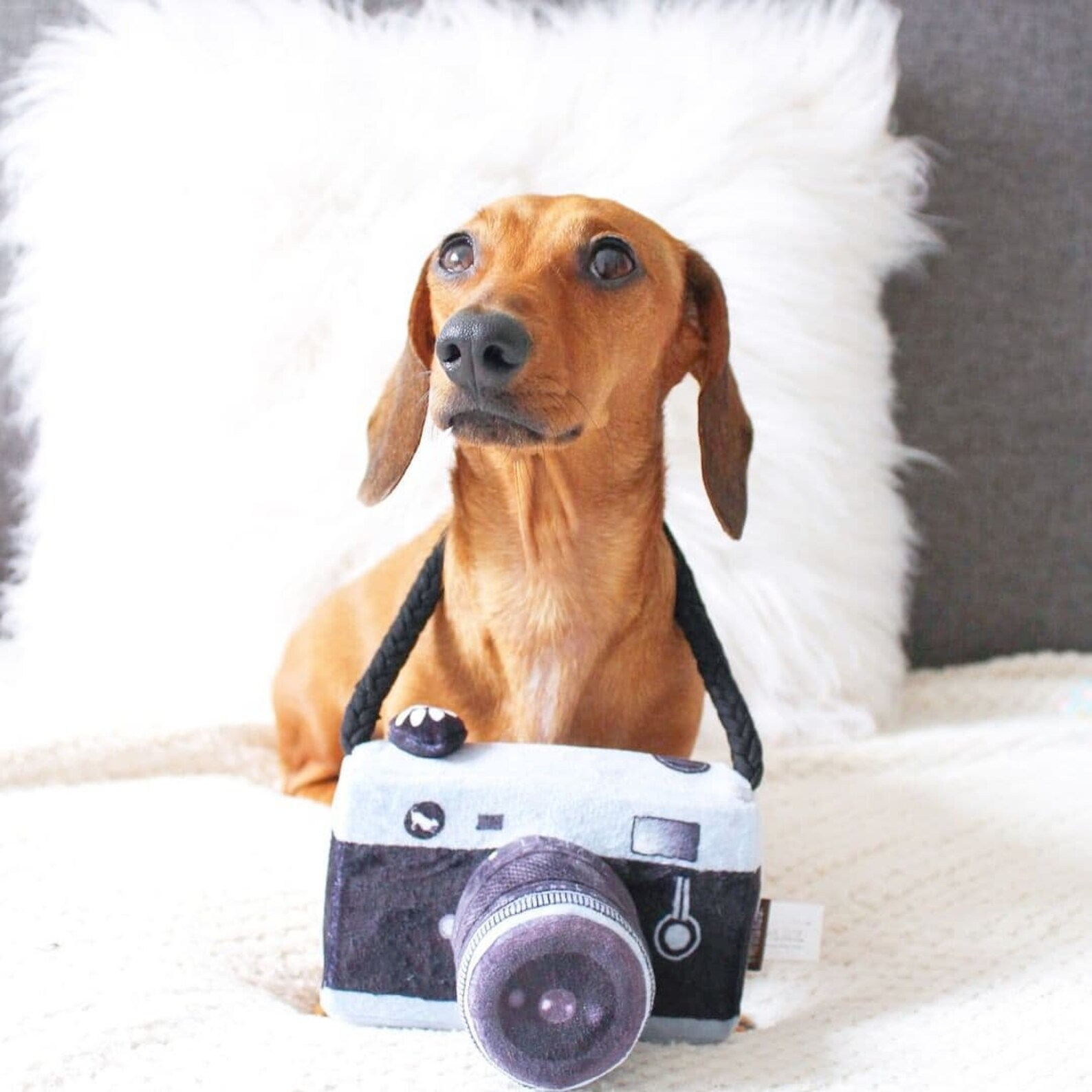 Dog posing with camera toy