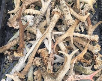 Set Bulk of 20 Deer Whole Antlers Not Cut up Antlers and Last Long with Dogs Antler Natural Dog Chew - Large measuring approx 10-20 cm long.