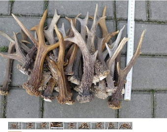 Deer Antler Natural Dog Chew - Large (Set of 5 Deer Whole Antlers Not Cut up Antlers and Last Long with Dogs)