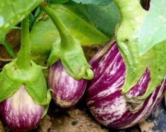 Buy 4 get 1 FREE !!! Free shipping 20 Organic Long Italian Eggplant seeds
