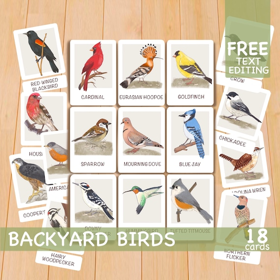 Toddler Flash Cards Backyard Birds Printable Flashcards
