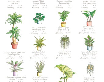 How Not to Kill Your Houseplants Poster