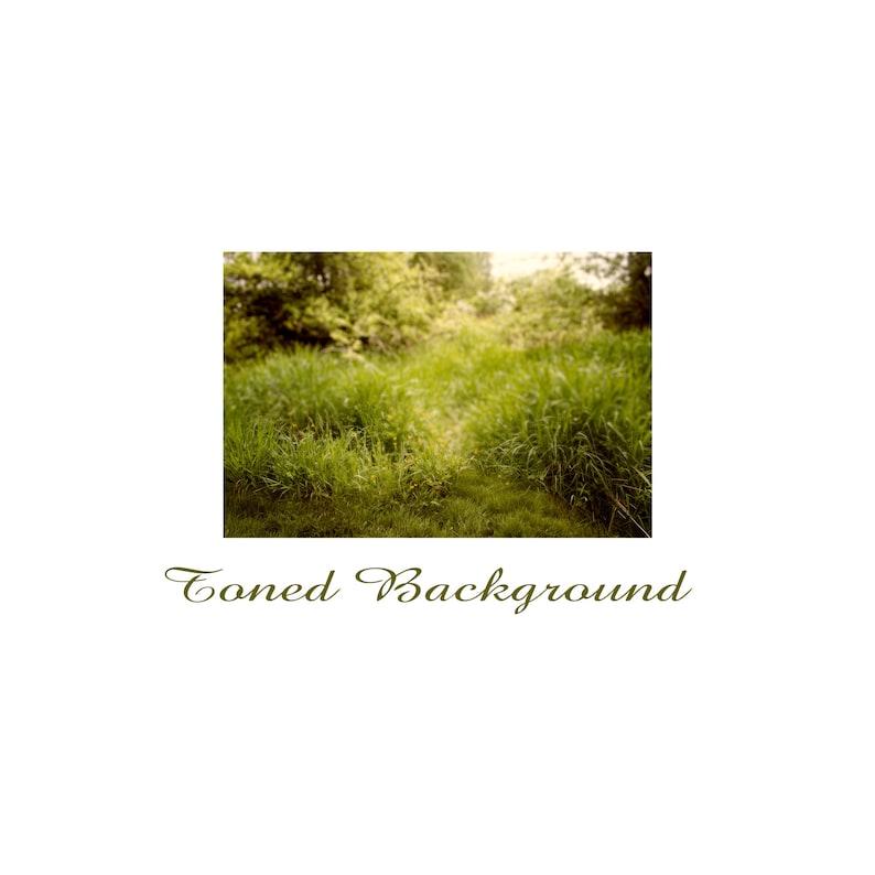 Summer BackgroundPhotoshop BackgroundTransparent PNGSpring BackgroundGrass OverlayNature BackgroundMeadow BackgroundPNG PNG Overlay