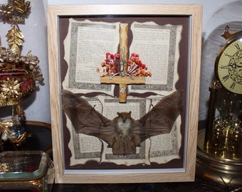 Real bat frame naturalized anti christ cabinet of curiosity genuine naturalized religious witch oddities