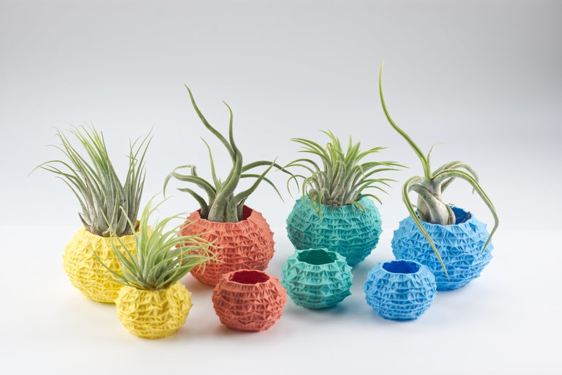 Urchin-style air plant holder recycled plastic  ECHINUS image 0