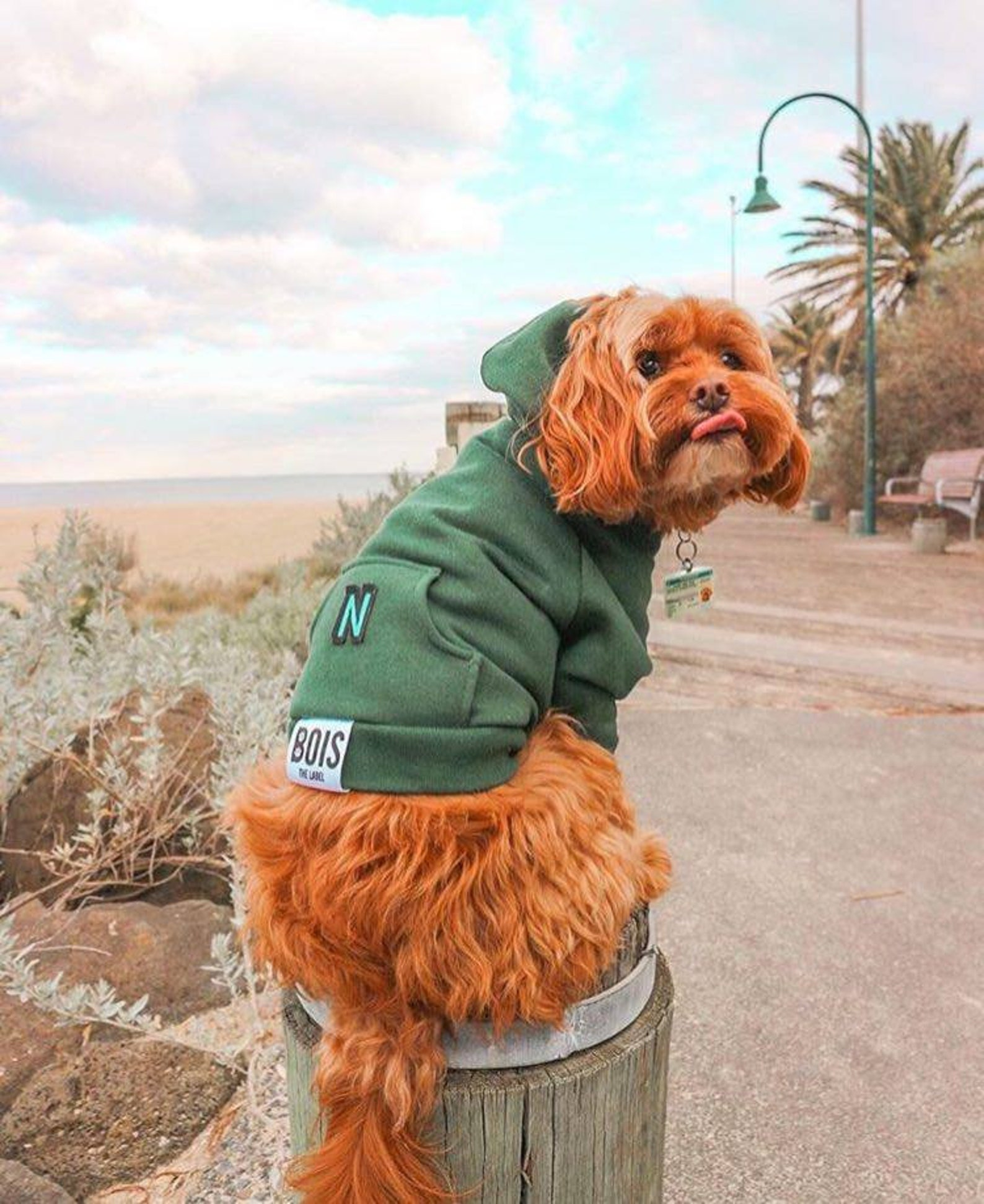 Dog posing at the beach in green dog hoodie