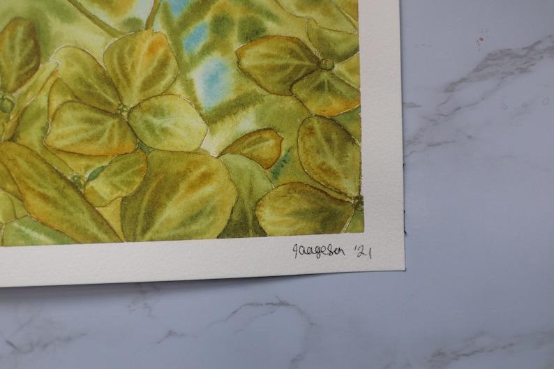 9x12 Original Watercolor Painting Green Hydrangea Flowers