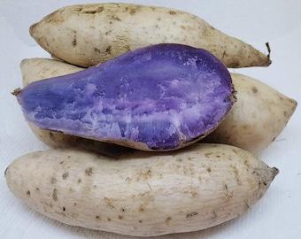 Hawaiian Okinawan Purple Sweet Potatoes Ubi Yam 2 Pounds