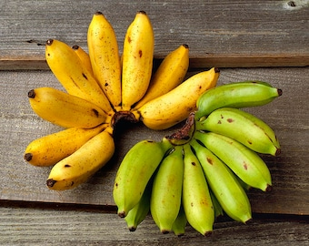Apple Bananas, Fresh Apple Bananas, Manzano  [3 lbs]