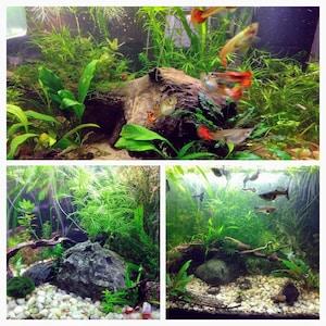 Aquarium Plants Etsy